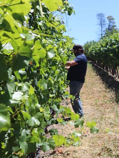 Jenkins Vineyard Experience