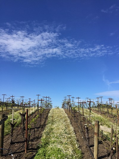 Ritchie Vineyard Experience