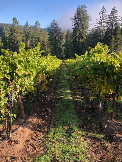 Three Perch Vineyard Experience